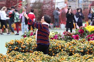 香港︰選購花卉迎佳節